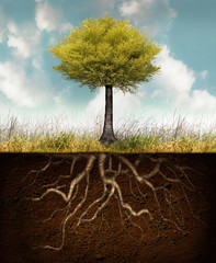 Garden Poster Surrealism Development of life