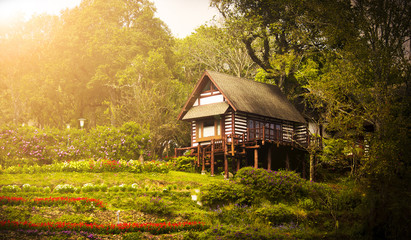 beautiful background of little house in the wood with small garden infront of it in majestic tone