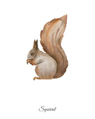 Handpainted watercolor poster with squirrel