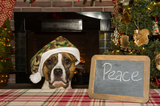 A cute dog wearing a camouflage Santa hat wishing for Peace on Earth