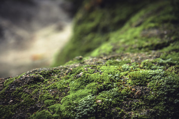 Mossy stone in highlands with blurred background