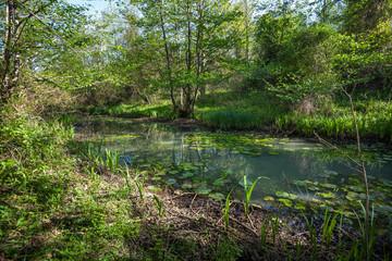 Beautiful green spring forest landscape, Kolkheti National Park