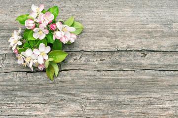 Apple tree blossom spring flowers