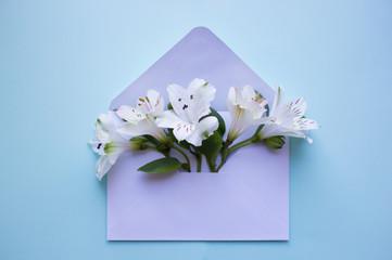 Beautiful tender bouquet of Alstroemeria in envelope on blue background