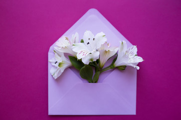 Beautiful tender bouquet of Alstroemeria in envelope on crimson background