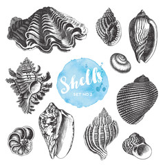 summer, beach and ocean vector design elements: collection of hand drawn sea shells - set 2