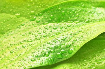 green plant leaf after rain
