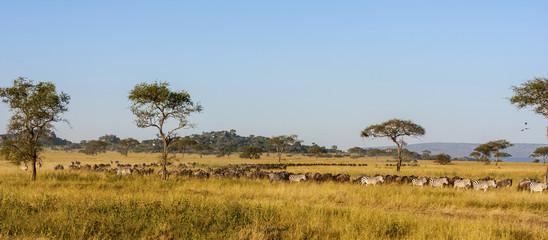 The Great Migration. Serengeti National Park, Tanzania