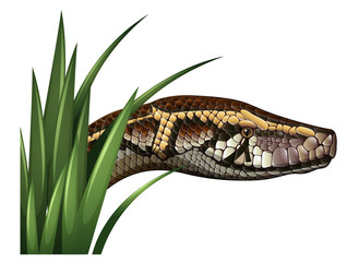 Snake head behind green grass