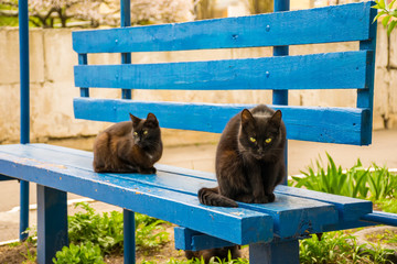 Two black cats rest on a blue wooden bench.