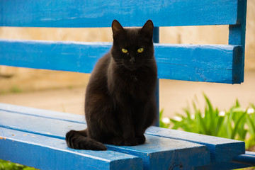 Black cat resting on a blue wooden bench