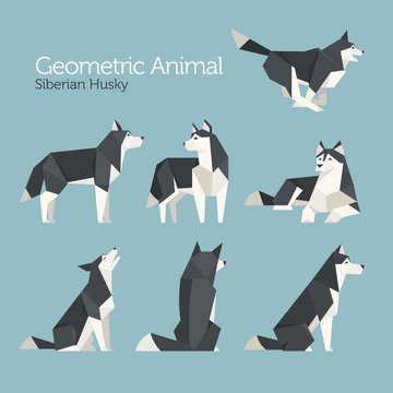 geometric low poly husky dog flat design illustration set