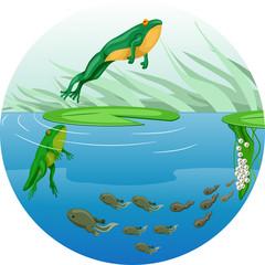 Frog Life Cycle Chart
