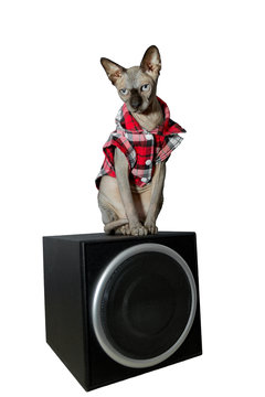 Cat sphinx in checkered shirt sit on the speaker