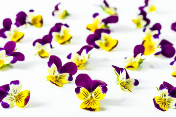 Pansy flowers, pattern of summer wildflowers on white background, overhead