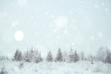 background winter forest covered with snow