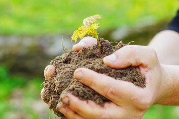 Female hands holding soil and plant, closeup a