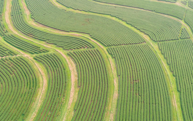 Tea plantation in north of Thailand. Aerial view from flying drone