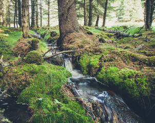 Small forest stream in Scotland