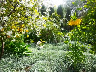 Gartenparadies, es blüht! Gelbe Tulpen und Kaiserkronen, (Tulipa) und (Fritillaria imperialis)