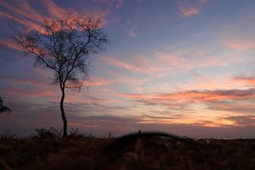 beautiful sunrise sky with silhouette tree