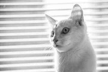 White cat witty look photo