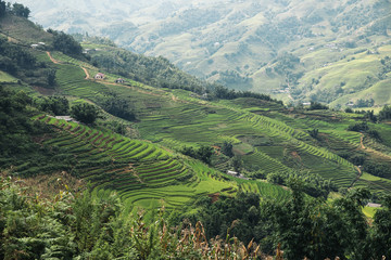 Landscape about terraced rice field in Sapa.