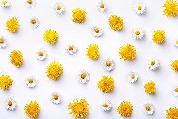 Daisy and dandelion pattern. Flat lay spring and summer flowers on a white background. Repeat concept. Top view