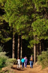 Hikers about to enter in the pine forest