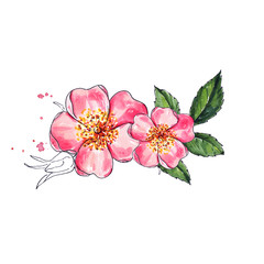 Rose flowers, Watercolor painting