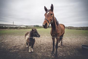 Horse friends on a farm