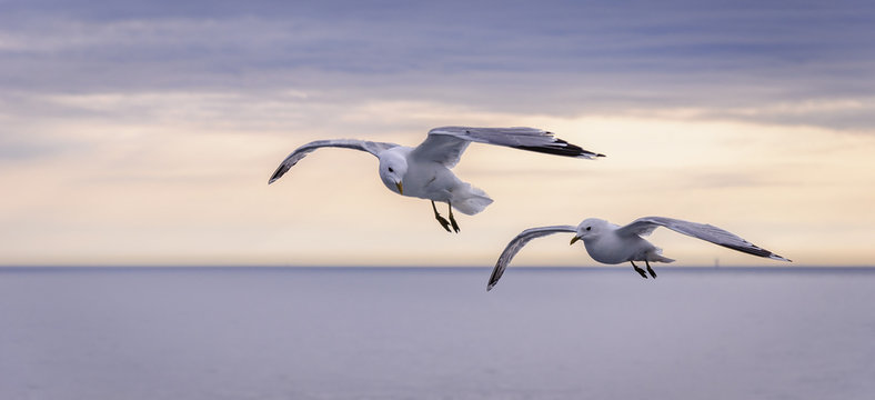 Two Seagulls flying over the sea at sunset