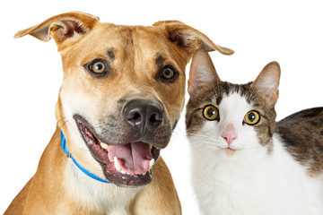 Happy Crossbreed Cat and Dog Together