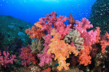 Underwater coral reef with fish in ocean