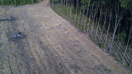 Deforestation. Logging