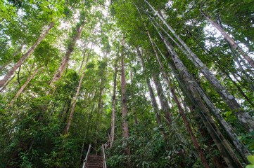 nature trail,path with wooden bridge in deep forest (National Park, Thailan)