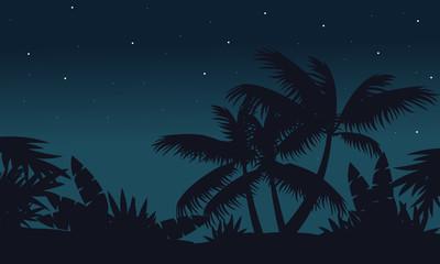 At night palm on jungle scenery