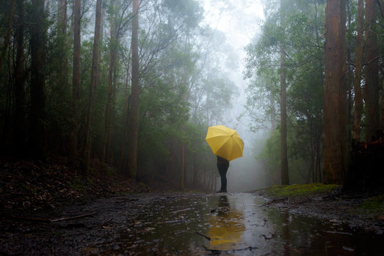 A girl with a yellow umbrella stands in a wet and foggy forest. Tasmania, Australia.