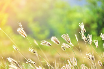 meadow with nature background