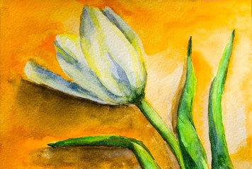Tulips watercolor on paper