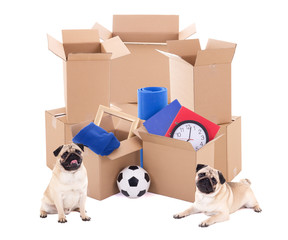 brown cardboard boxes with different stuff and cute dogs isolated on white