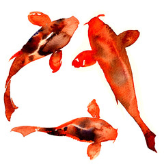 Red japanese oriental koi rainbow carps, fishes isolated, watercolor illustration on white