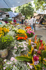 Tropical flowers display at the farmers market in Rio de Janeiro, Brazil