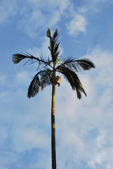 Palm tree against blue sky in the sunshine