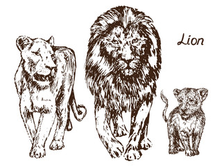 Lion, lioness and lion cub, family,  hand drawn doodle, sketch in pop art style, vector illustration