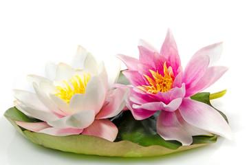 Auszeit, Entspannung, Meditation: Seerosen auf Seerosenblatt vor weißem Hintergrund :)