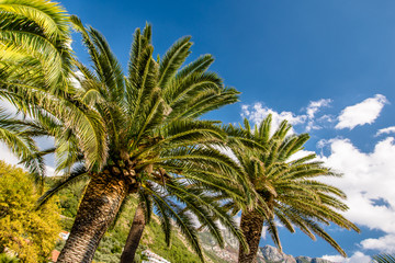 palm leaves on a background of blue sky