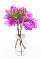 Spring pink peonies in glass vase. Isolated.