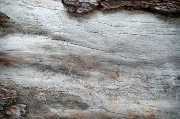 Pine bark close up background.