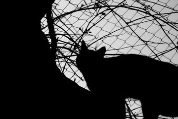 Cat silhoutte